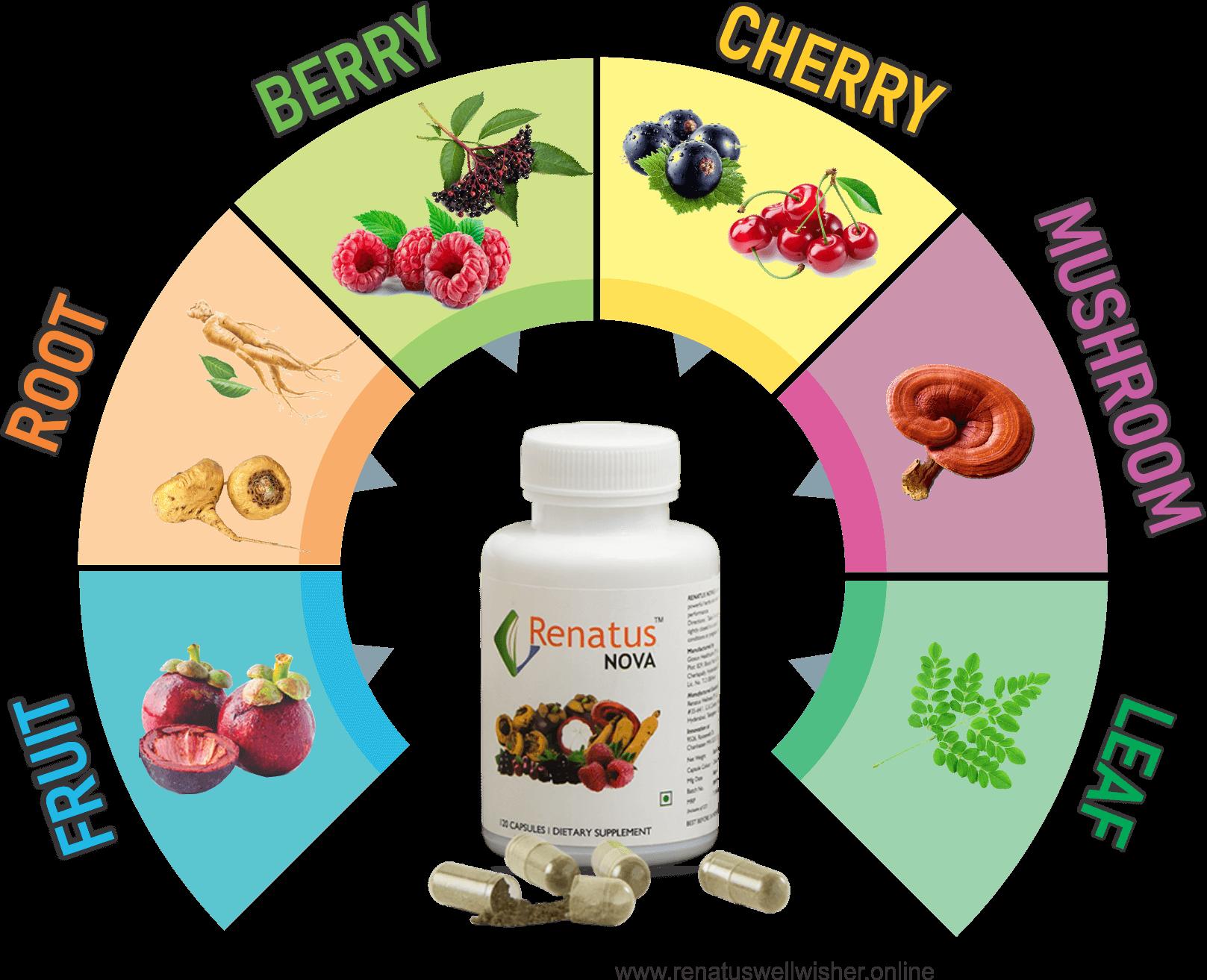 renatus nova ingredients